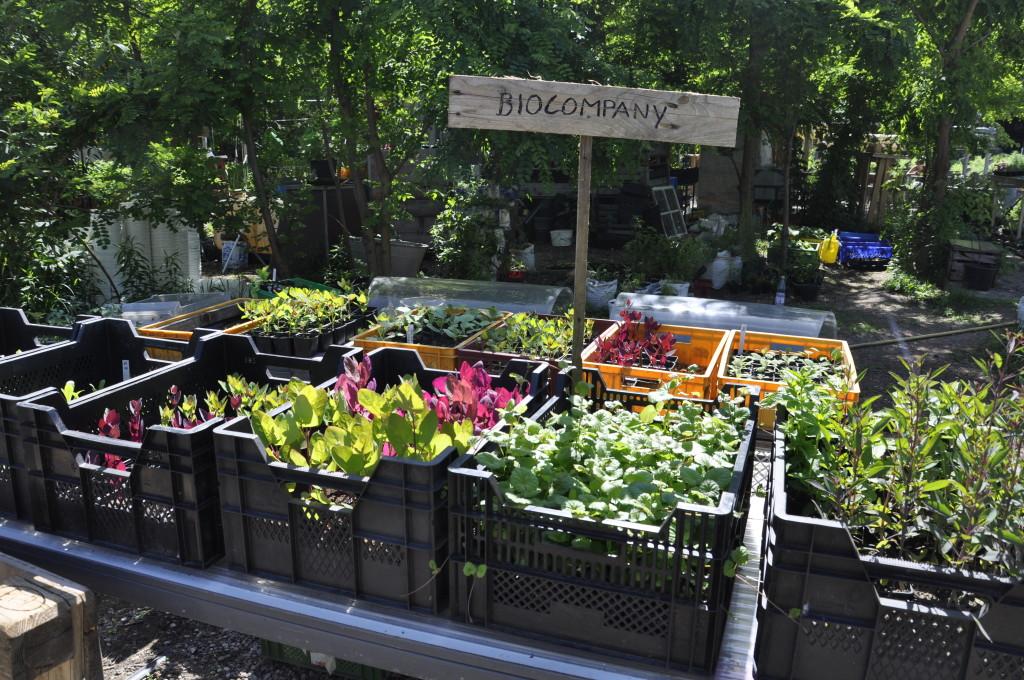 Berlin Kreuzberg Urban Gardening