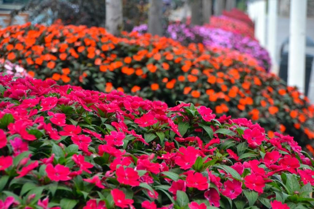 Italien Blumen