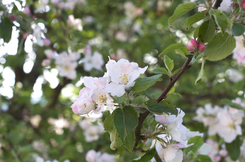Natur Blüten