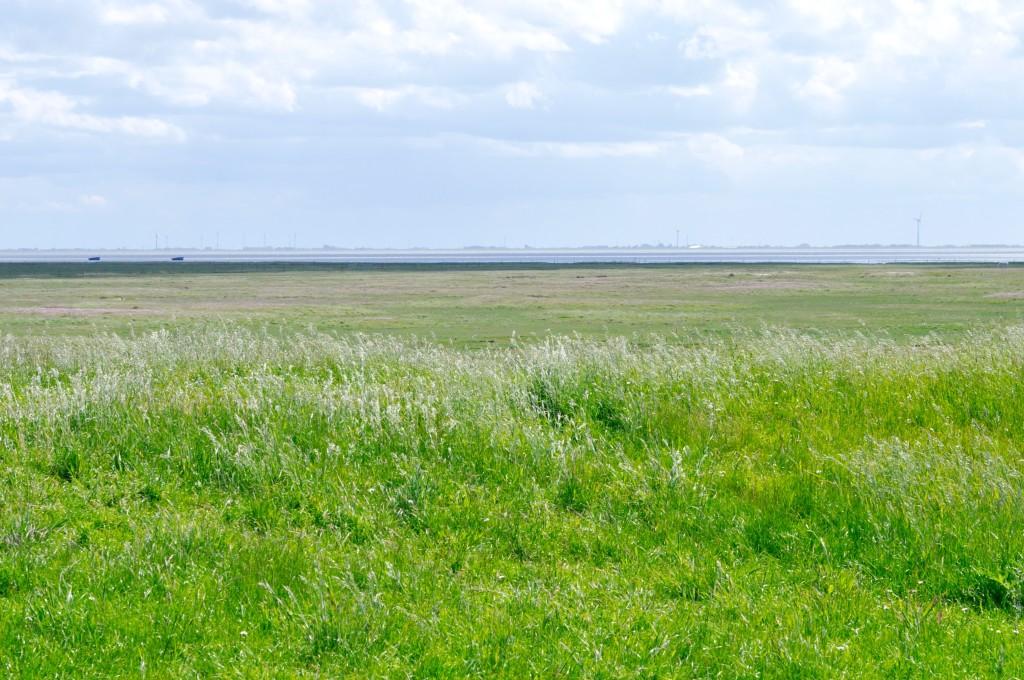 Spiekeroog Natur Ostfriesland
