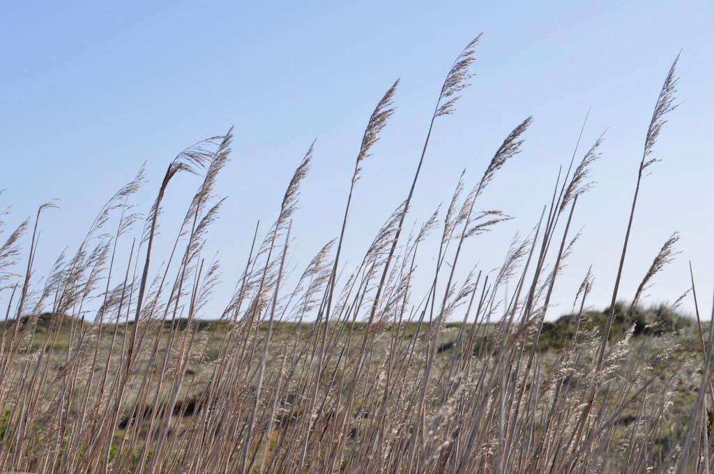 Natur Düne Ostfriesland Nordsee