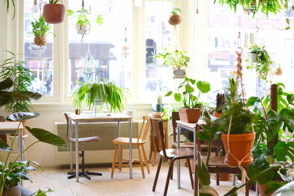 Wildernis Amsterdam West plants grüner Laden Hotspot
