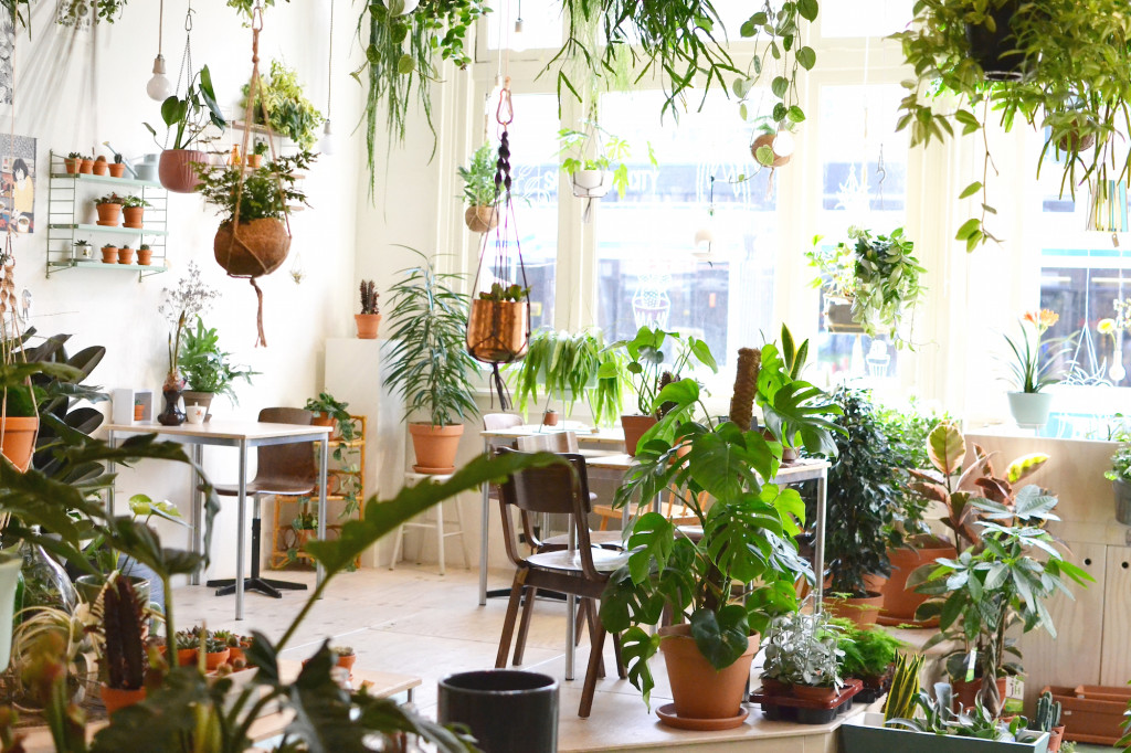 Wildernis Amsterdam West plants grüner Laden Hotspot Café
