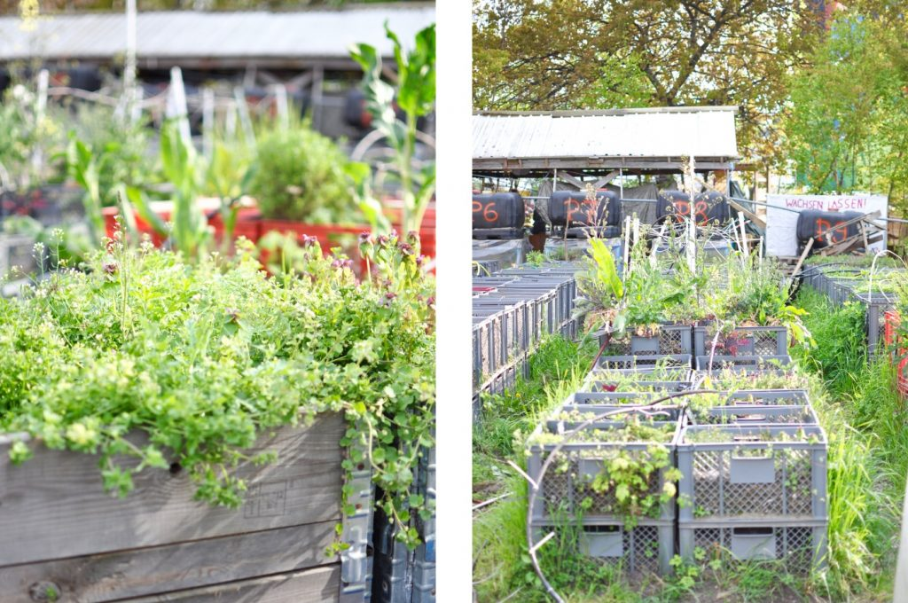 Prinzessinnengärten Berlin Kreuzberg Urban Gardening Projekt