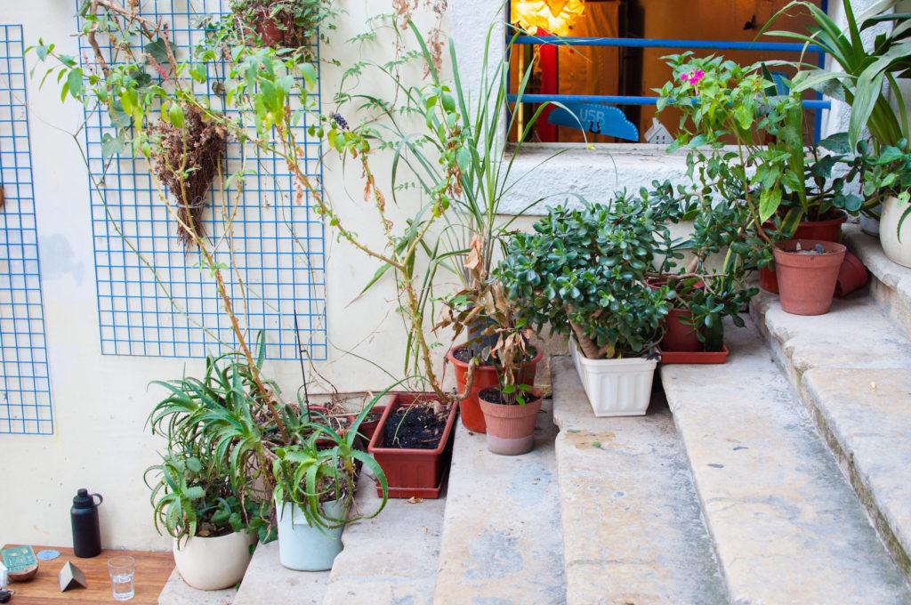 The Food Temple Vegan Food Lisbon
