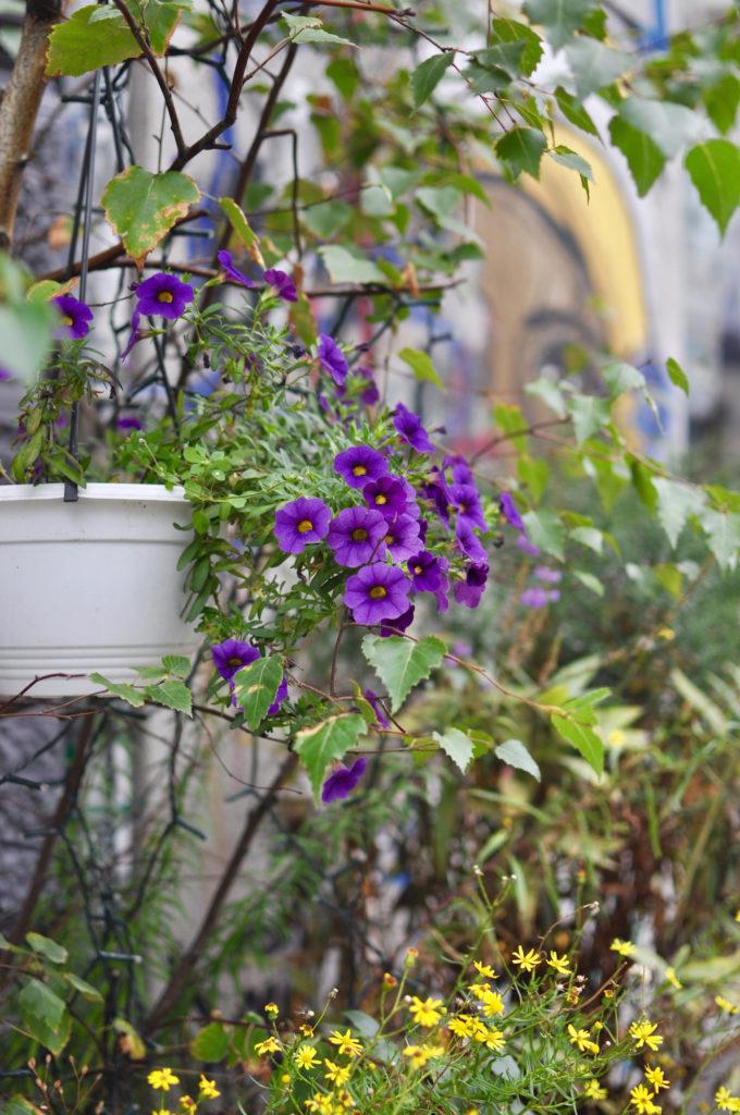 urban-gardening-hamburg-karoviertel-reiseblog