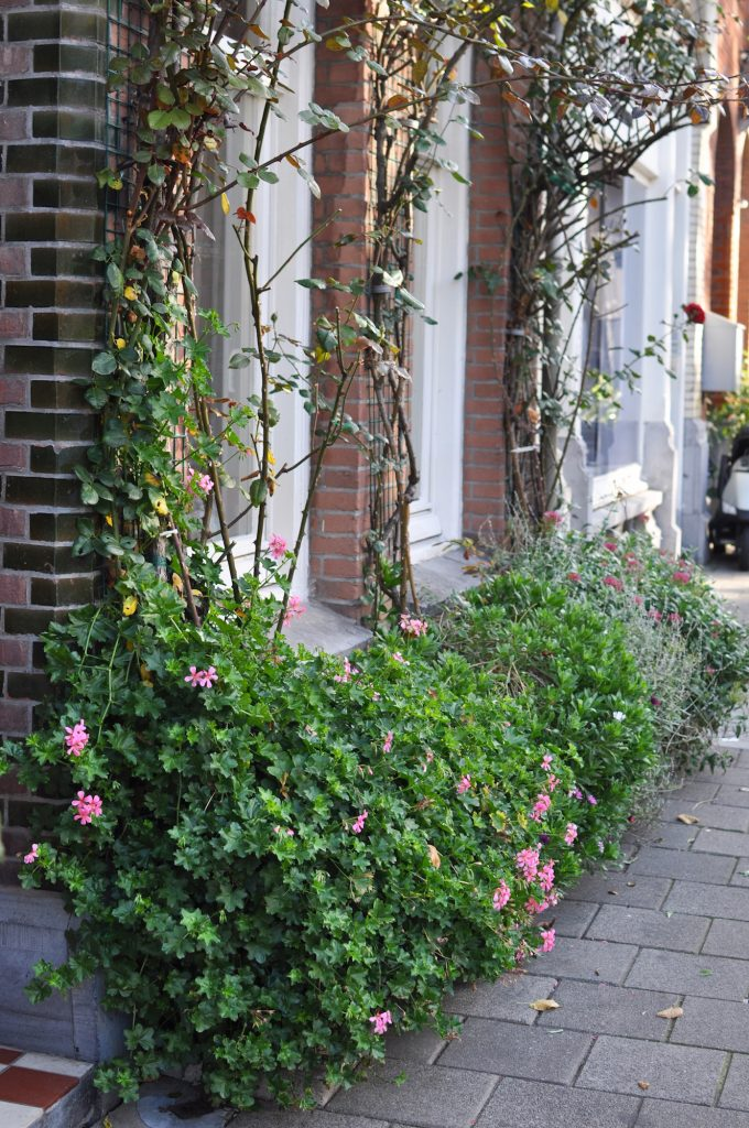 amsterdam-urban-gardening-urban-jungle