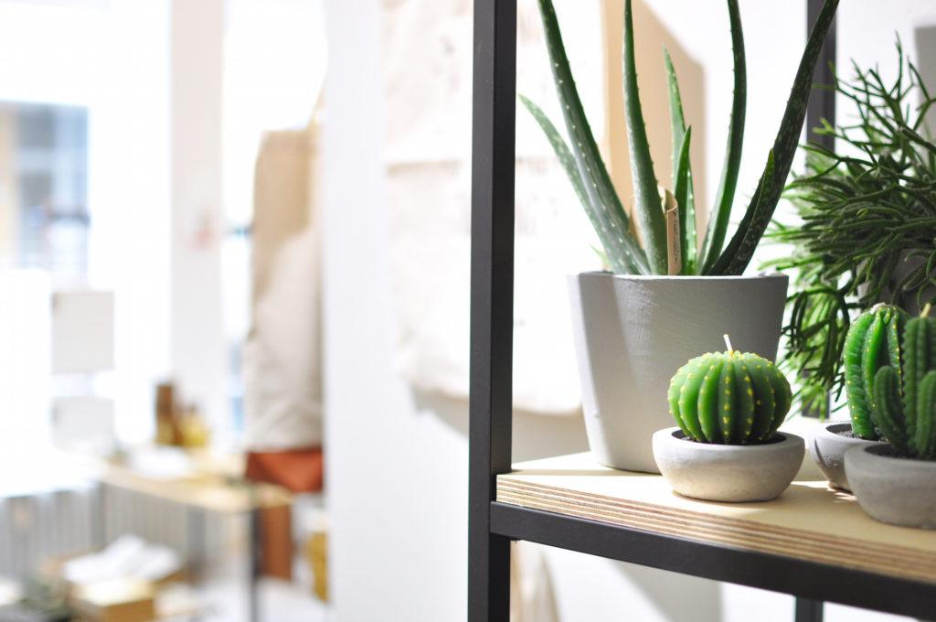 kaktuskerze-winkel-van-sinkel-hamburg-wexstrasse-neustadt-concept-store-urbnjungle