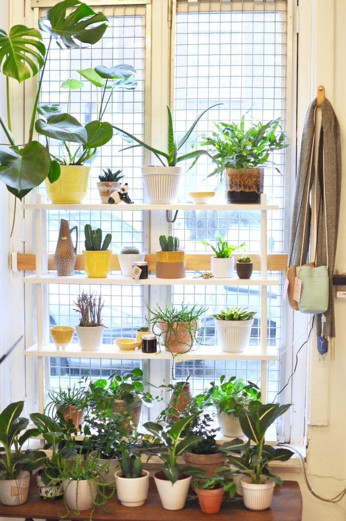 amsterdam-de-pijp-concept-store-kolifleur-plants-urbanjunglebloggers