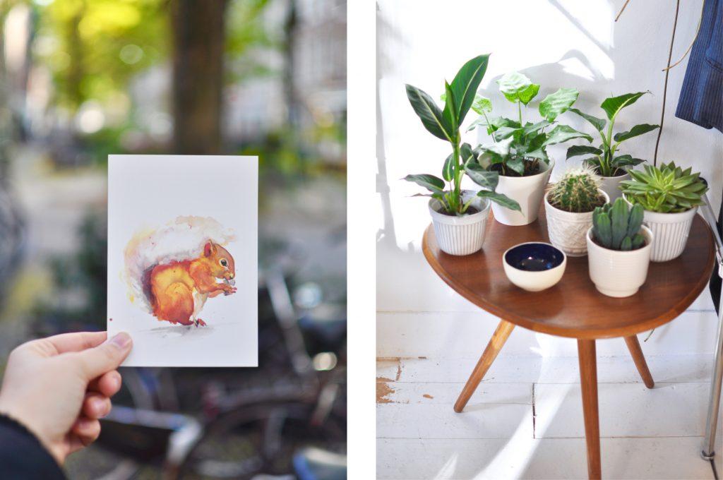 Amsterdam De Pijp Concept Store Kolifleur Postcard veer illustratie squirrel