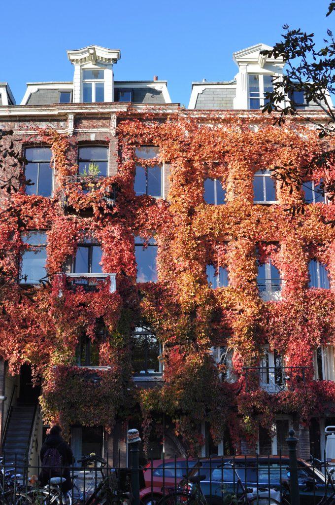amsterdam-de-pijp-sarphatipark-ivy-streetphotography