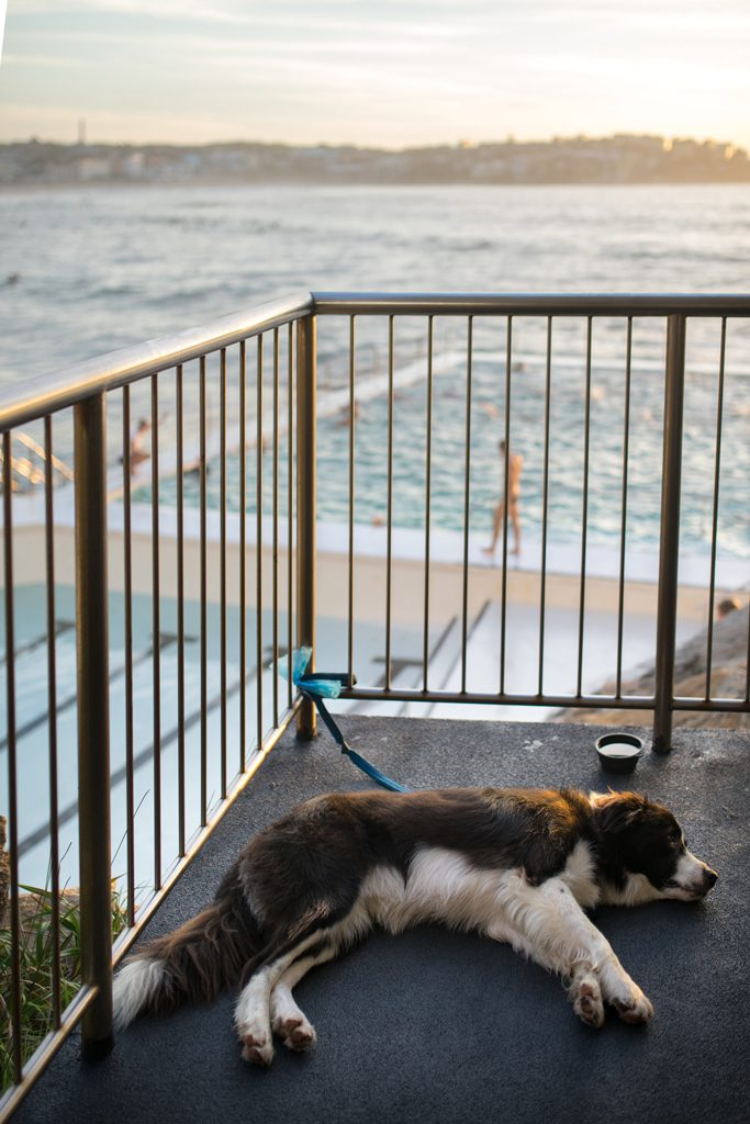 Bondi Beach Icebergs Club Pool Dog Sunrise