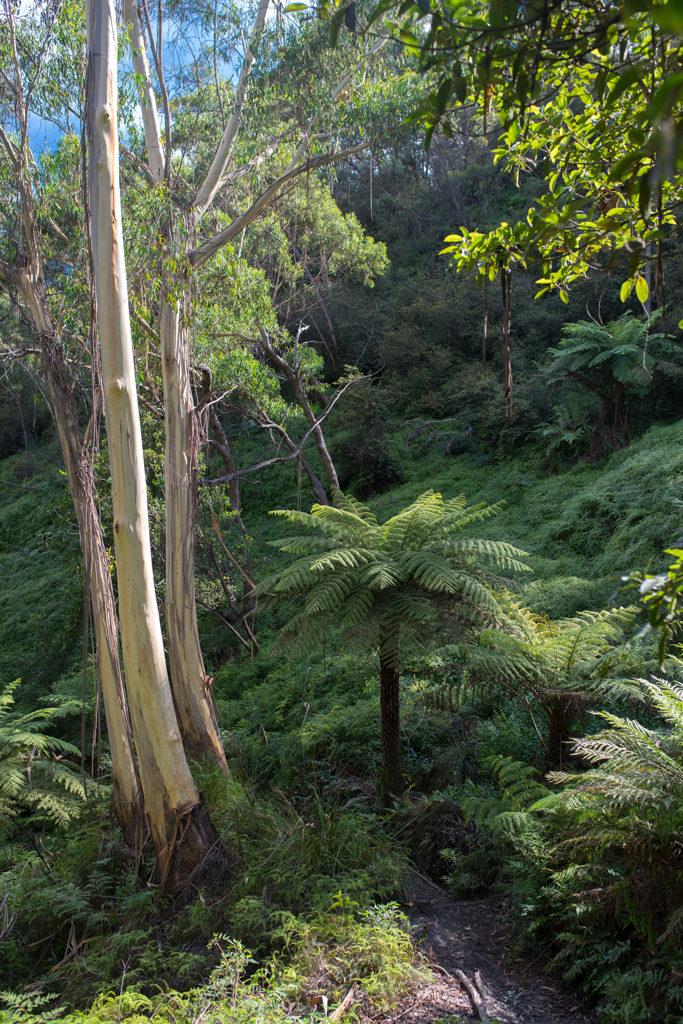 Blue Mountains Palme Botanik Australien