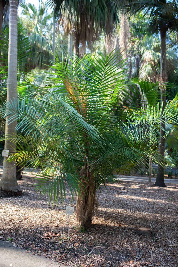 Australien-Botanical-Garden-Sydney-Guide
