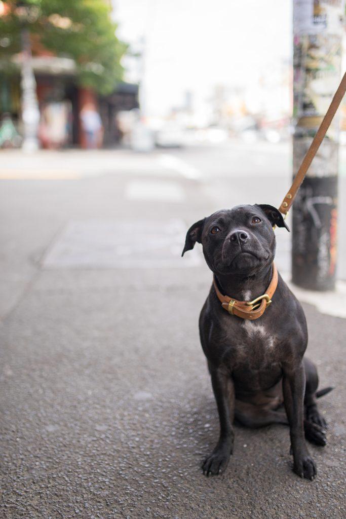 Dog-Melbourne-Australia-Fitzroy