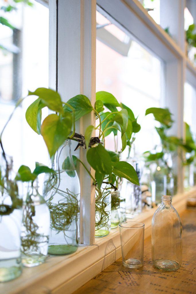 Little-Rogue-Blue-Plants-Melbourne-specialty-coffee-Melbourne-Guide-Urbanjunglebloggers