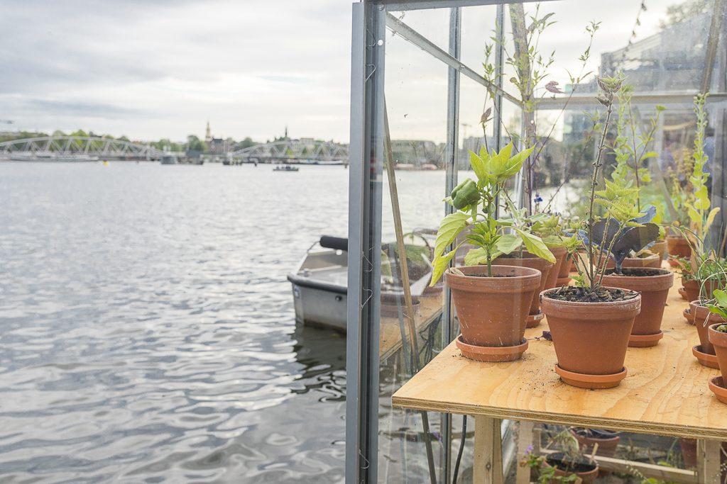 Mediamatic Dijkspark Urban gardening Amsterdam Ij