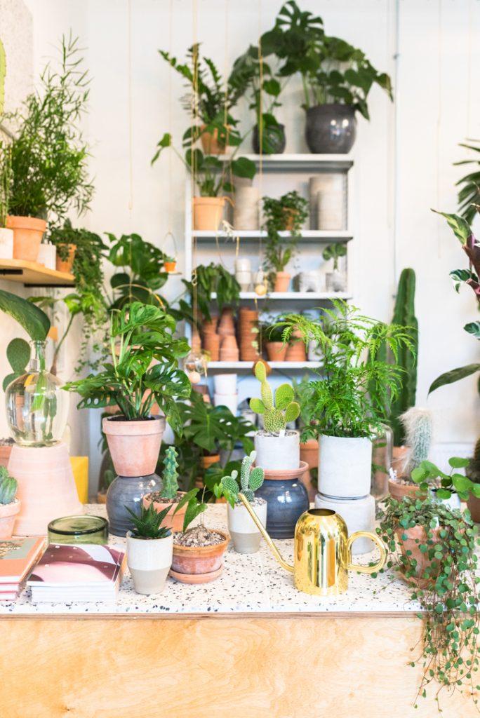 Plant København Kopenhagen Guide Tipps Urban Jungle Design