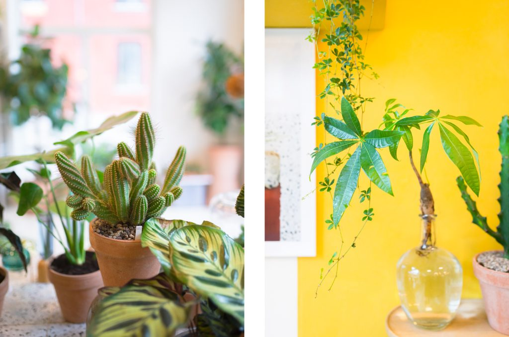 Plant København Kopenhagen Guide Tipps Urban Jungle Design Kaktus