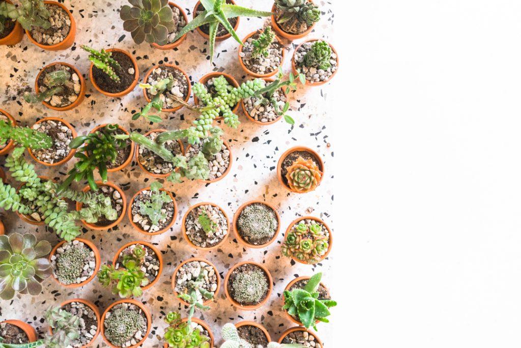 Plant København Kopenhagen Guide Tipps Urban Jungle Kaktus