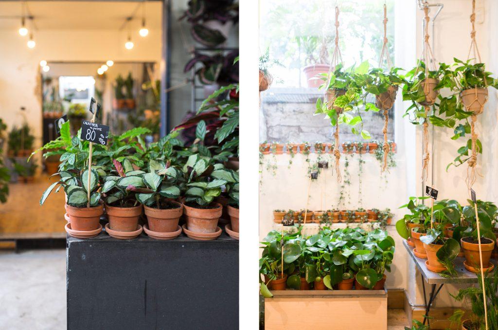 Plants Copenhagen Travel Guide Stalks & Roots Pflanzen