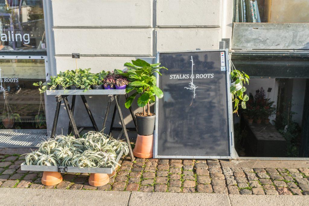 Stalks & Roots Kopenhagen Pflanzenladen